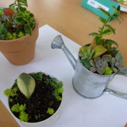 地域交流会  多肉植物寄せ植え教室(デイサービス)